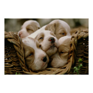 basket full of puppies poster
