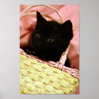 Basket Kitten Poster