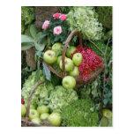 Basket of apples postcards