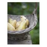 Basket of freshly picked pears. postcard