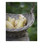 Basket of freshly picked pears poster