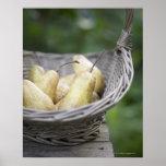 Basket of freshly picked pears. poster