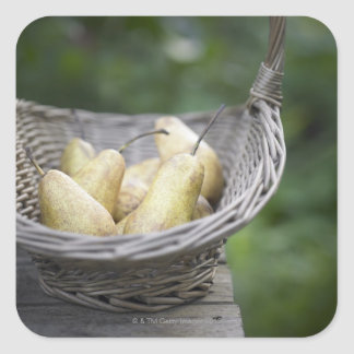 Basket of freshly picked pears square sticker