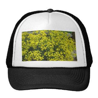 Basket of Gold Trucker Hat