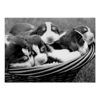 Basket of Puppies Poster
