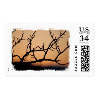 Basket of Sunset Postage Stamp