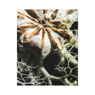 Basket Star (Gorgonocephalus eucnemis) Canvas Print