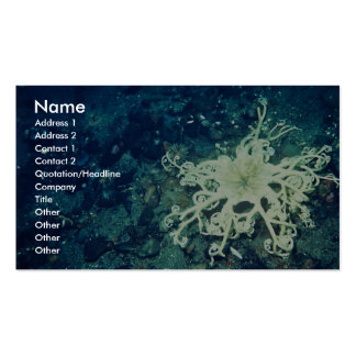 Basket Starfish Business Card