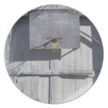 Basketball net on rustic building plates