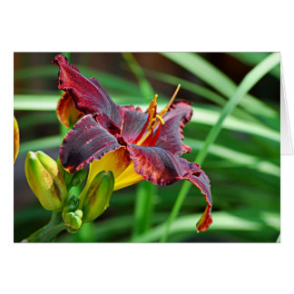 Basking Day Lily Greeting Cards