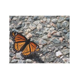 Basking Monarch Canvas Print