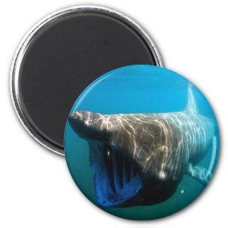 Basking shark 2 inch round magnet