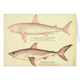 Basking Shark and Mackerel Shark Card