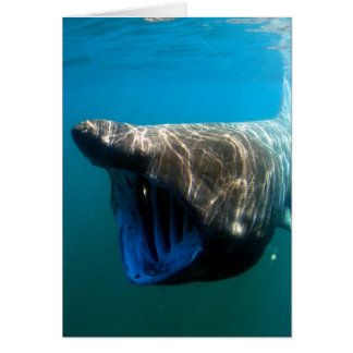 Basking shark card