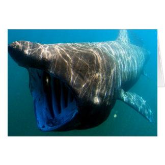 Basking shark card