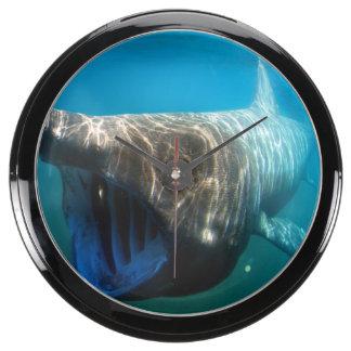 Basking shark (Cetorhinus maximus) Aqua Clock