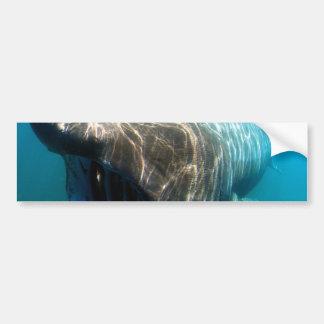 Basking shark (Cetorhinus maximus) Bumper Sticker