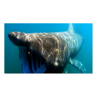 Basking shark (Cetorhinus maximus) Double-Sided Standard Business Cards (Pack Of 100)