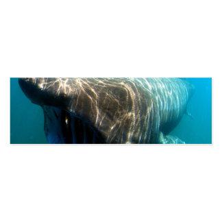 Basking shark (Cetorhinus maximus) Double-Sided Mini Business Cards (Pack Of 20)