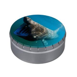 Basking shark (Cetorhinus maximus) Jelly Belly Tins