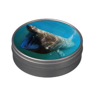 Basking shark (Cetorhinus maximus) Jelly Belly Candy Tins