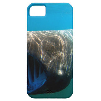 Basking shark (Cetorhinus maximus) iPhone 5 Covers