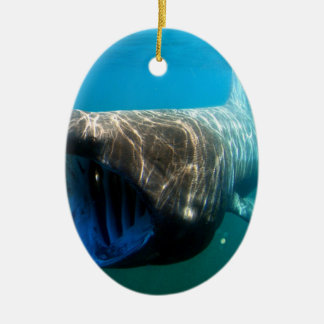 Basking shark (Cetorhinus maximus) Ceramic Ornament