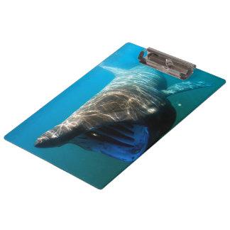 Basking shark (Cetorhinus maximus) Clipboards