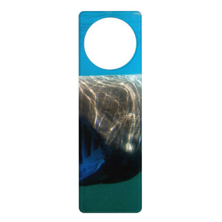 Basking shark (Cetorhinus maximus) Door Hanger