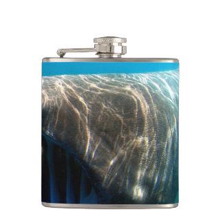 Basking shark (Cetorhinus maximus) Flask