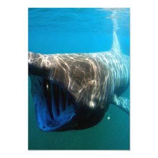 Basking shark (Cetorhinus maximus) 5x7 Paper Invitation Card
