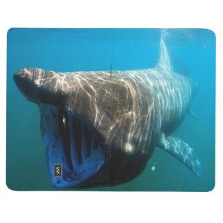 Basking shark (Cetorhinus maximus) Journals