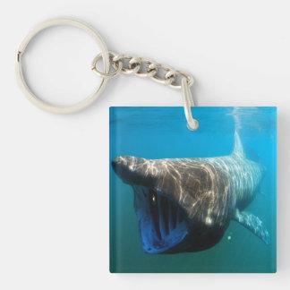 Basking shark (Cetorhinus maximus) Double-Sided Square Acrylic Keychain