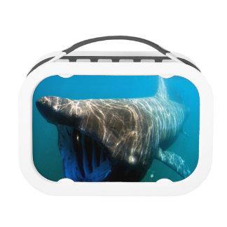 Basking shark (Cetorhinus maximus) Lunchbox