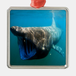 Basking shark (Cetorhinus maximus) Metal Ornament