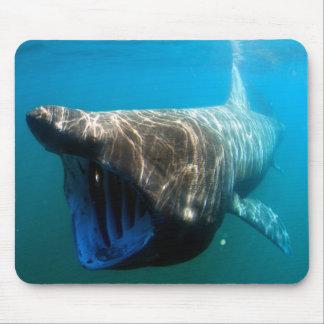 Basking shark (Cetorhinus maximus) Mouse Pad