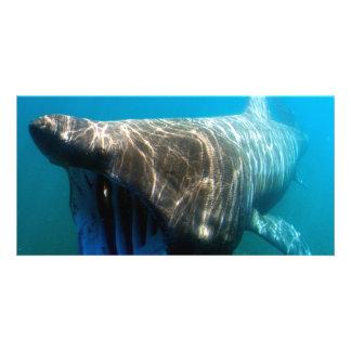 Basking shark (Cetorhinus maximus) Photo Greeting Card