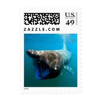 Basking shark (Cetorhinus maximus) Postage Stamps