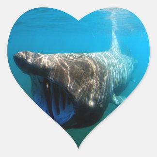 Basking shark (Cetorhinus maximus) Heart Sticker