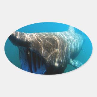 Basking shark (Cetorhinus maximus) Oval Stickers