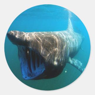 Basking shark (Cetorhinus maximus) Classic Round Sticker
