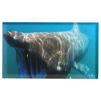 Basking shark (Cetorhinus maximus) Table Card Holder