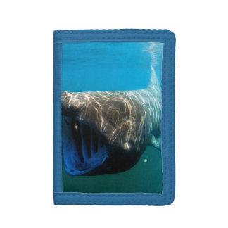Basking shark (Cetorhinus maximus) Trifold Wallets