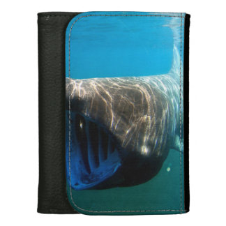 Basking shark (Cetorhinus maximus) Leather Wallet For Women