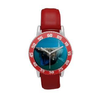 Basking shark (Cetorhinus maximus) Watches