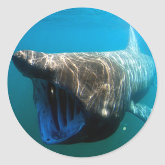 Basking shark classic round sticker