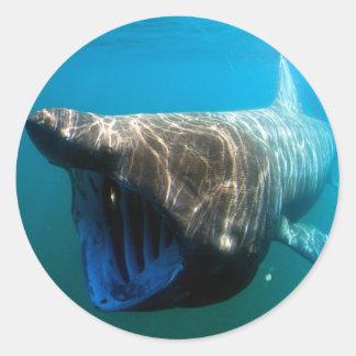Basking shark classic round sticker