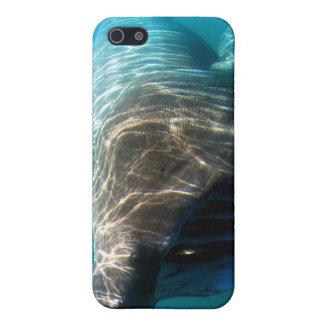 Basking shark case for iPhone 5