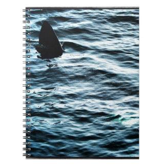 Basking shark notebook