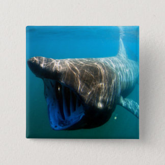 Basking shark pinback button